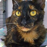 Adopt A Pet :: Verbena - Salisbury, MA