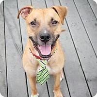 Adopt A Pet :: Pikachu - Clearwater, FL