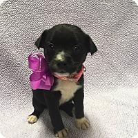 Adopt A Pet :: Sasha - Fort Atkinson, WI