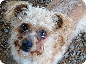 Terrier (Unknown Type, Medium) Mix Dog for adoption in Spartanburg, South Carolina - To-To