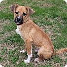 Adopt A Pet :: PUPPY CASPIAN