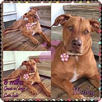Adopt A Pet :: marley - Homestead, FL