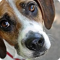 Adopt A Pet :: Rudy Pelle - Waldorf, MD