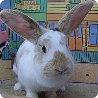 Adopt A Pet :: Cupid - Foster, RI