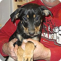 Adopt A Pet :: Iris - Greenville, RI