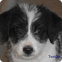 Adopt A Pet :: Beasley - Arenas Valley, NM