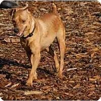 Adopt A Pet :: Wyler - Ft. Myers, FL