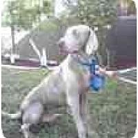 Adopt A Pet :: Beau  **ADOPTED** - Eustis, FL