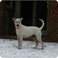 Adopt A Pet :: Nichola - Alexandria, VA