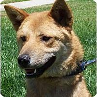 Adopt A Pet :: Haru - Marysville, CA