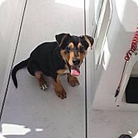 Adopt A Pet :: Gabbie - New Orleans, LA