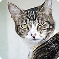 Adopt A Pet :: Miss Pudding - Seal Beach, CA
