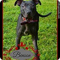Adopt A Pet :: Benson - Orlando, FL