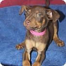 Adopt A Pet :: Clarissa