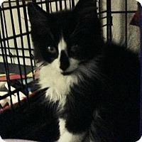 Adopt A Pet :: Peppermint Patty - East Brunswick, NJ