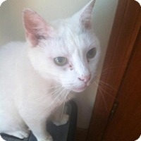 Adopt A Pet :: Casper - New Bedford, MA