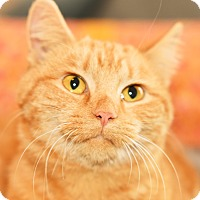 Adopt A Pet :: Buttercup - Xenia, OH