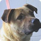 Adopt A Pet :: Kyser