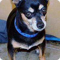 Adopt A Pet :: Paco - San Jacinto, CA