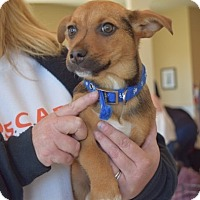 Adopt A Pet :: Dahlia - Sparta, NJ