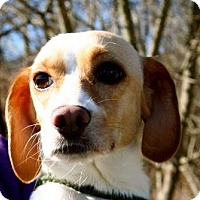 Adopt A Pet :: Bella - Erwin, TN