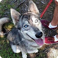 Adopt A Pet :: Rory - Arlington, VA