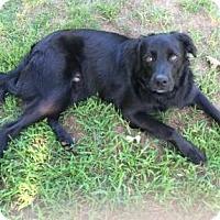 Adopt A Pet :: Smiley - Little Rock, AR