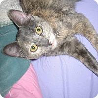 Adopt A Pet :: Sally - Queensbury, NY