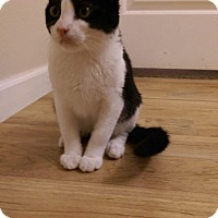 Adopt A Pet :: Usher - Temecula, CA