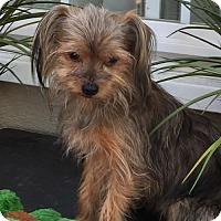 Adopt A Pet :: Timmy - Costa Mesa, CA