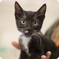 Adopt A Pet :: SJ - Dallas, TX