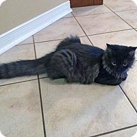 Adopt A Pet :: Tennyson - Mississauga, Ontario, ON