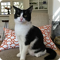 Adopt A Pet :: Bonnie Bell - Mount Pleasant, SC
