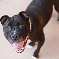 Adopt A Pet :: Marco - Woodland, CA
