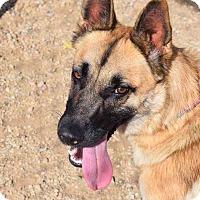 Adopt A Pet :: Alicia - Sierra Vista, AZ