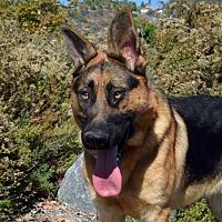 Adopt A Pet :: Chumley - San Diego, CA
