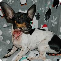 Adopt A Pet :: Jackson - Umatilla, FL