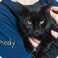 Adopt A Pet :: Andy - Somerset, PA