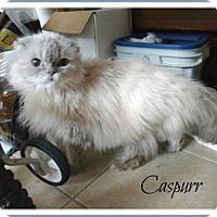 Adopt A Pet :: Caspurr - Blackstock, ON