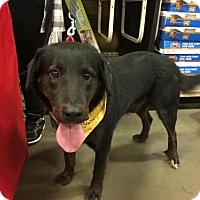 Adopt A Pet :: Puddles - Rockville, MD
