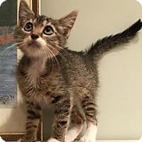 Adopt A Pet :: Paige Turner - Mobile, AL