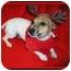 Photo 2 - Jack Russell Terrier Dog for adoption in Omaha, Nebraska - Foster