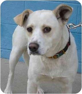 Bianca | Adopted Dog | Bianca | Burbank, CA | Labrador ...