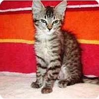Adopt A Pet :: CeCe - Scottsdale, AZ
