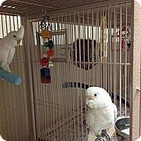 Adopt A Pet :: Daisy & Charlie - Punta Gorda, FL