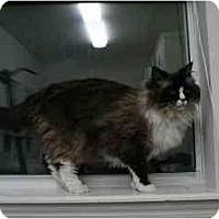 Adopt A Pet :: kudo - Davis, CA