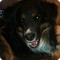 Adopt A Pet :: Tipper - Scottsdale, AZ