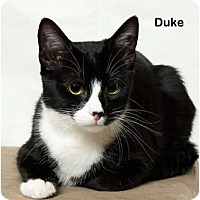 Adopt A Pet :: Duke - Portland, OR