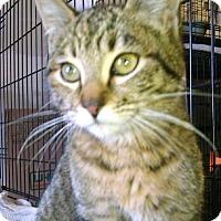 Adopt A Pet :: April - Centralia, WA