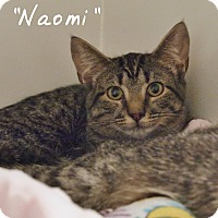 Adopt A Pet :: Naomi - Ocean City, NJ